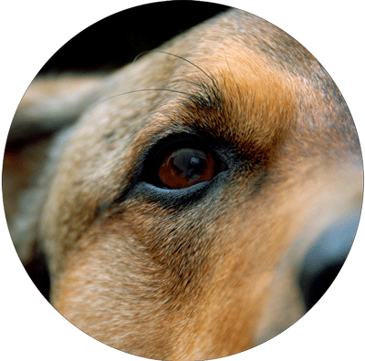 a closeup of a dog's eye